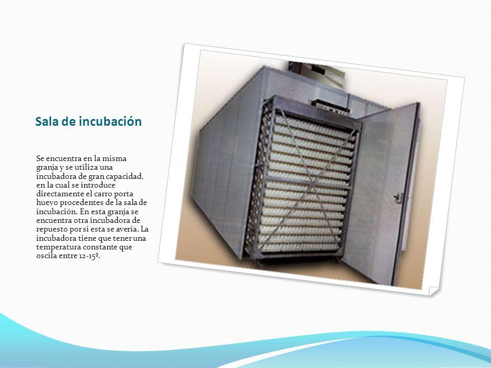 Sala de incubación