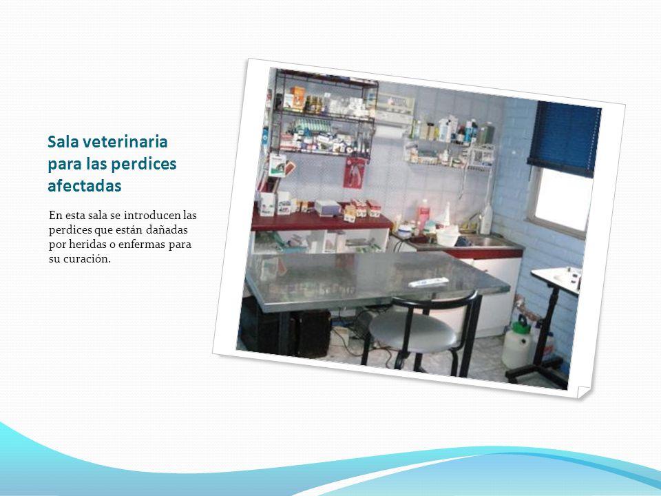 Sala veterinaria para las perdices afectadas