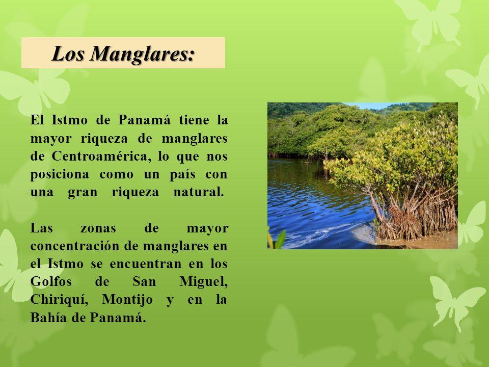 Los Manglares: