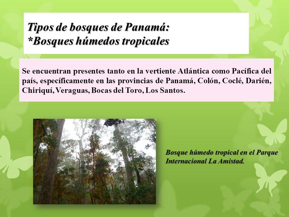 Tipos de bosques de Panamá: *Bosques húmedos tropicales
