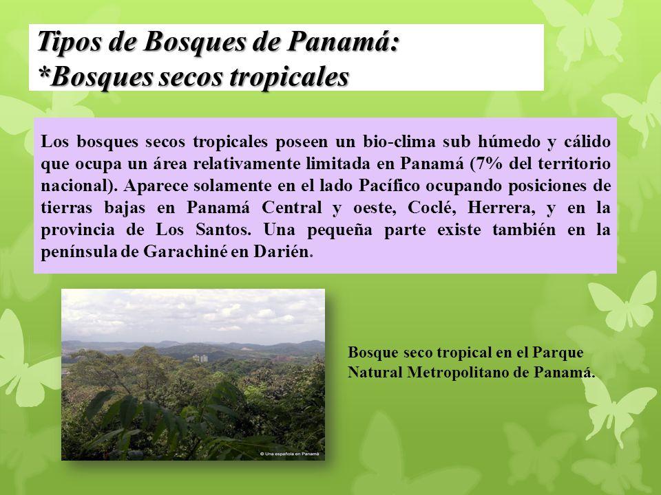 Tipos de Bosques de Panamá: *Bosques secos tropicales