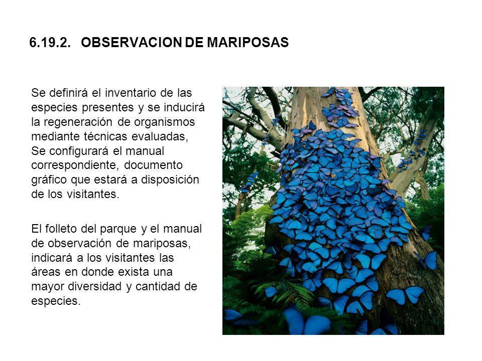 6.19.2. OBSERVACION DE MARIPOSAS