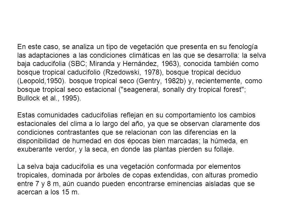 En este caso, se analiza un tipo de vegetación que presenta en su fenología las adaptaciones a las condiciones climáticas en las que se desarrolla: la selva baja caducifolia (SBC; Miranda y Hernández, 1963), conocida también como bosque tropical caducifolio (Rzedowski, 1978), bosque tropical deciduo (Leopold,1950).