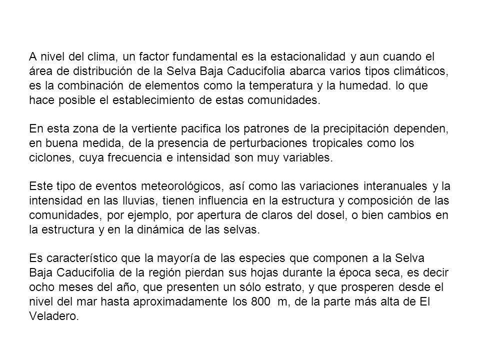 A nivel del clima, un factor fundamental es la estacionalidad y aun cuando el área de distribución de la Selva Baja Caducifolia abarca varios tipos climáticos, es la combinación de elementos como la temperatura y la humedad.