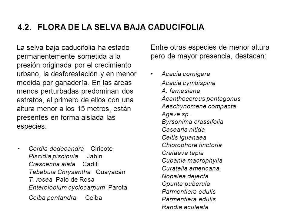 4.2. FLORA DE LA SELVA BAJA CADUCIFOLIA