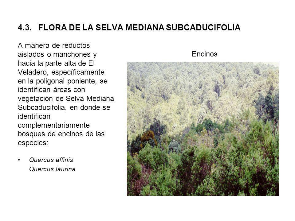 4.3. FLORA DE LA SELVA MEDIANA SUBCADUCIFOLIA