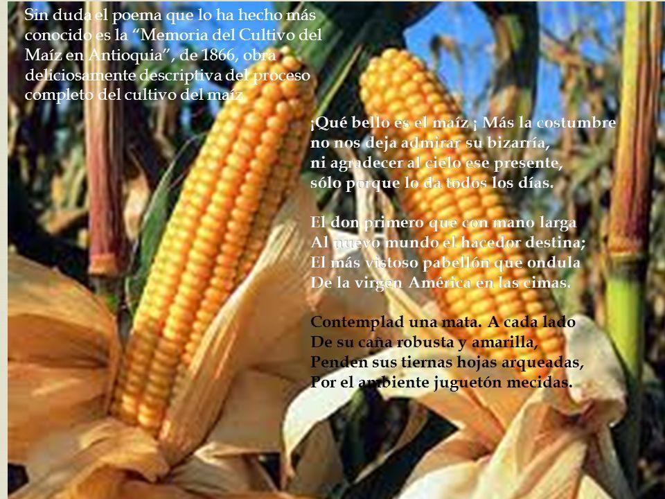 Sin duda el poema que lo ha hecho más conocido es la Memoria del Cultivo del Maíz en Antioquia , de 1866, obra deliciosamente descriptiva del proceso completo del cultivo del maíz