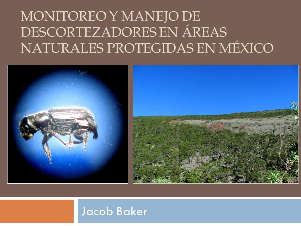 Monitoreo y Manejo de Descortezadores en Áreas Naturales Protegidas en México