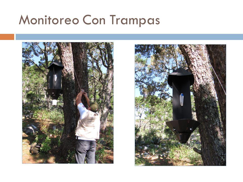 Monitoreo Con Trampas