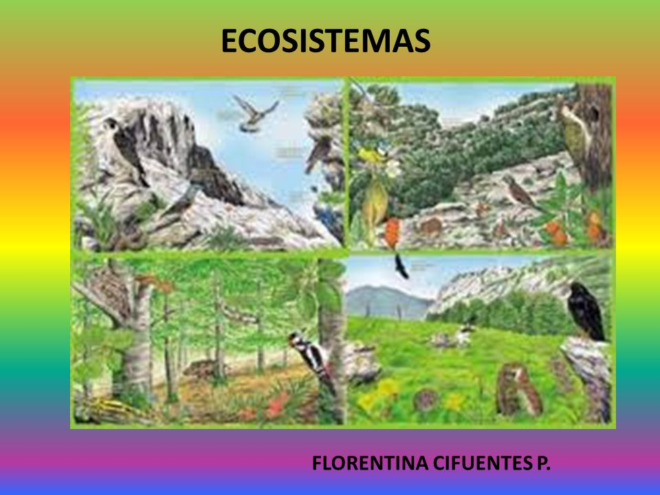 ECOSISTEMAS FLORENTINA CIFUENTES P.