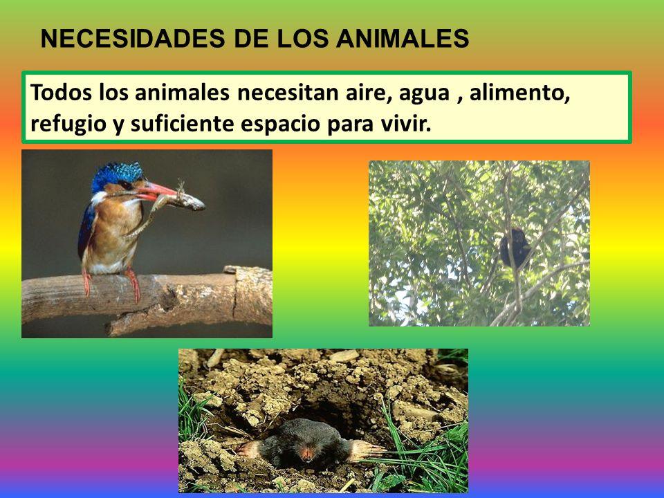 NECESIDADES DE LOS ANIMALES