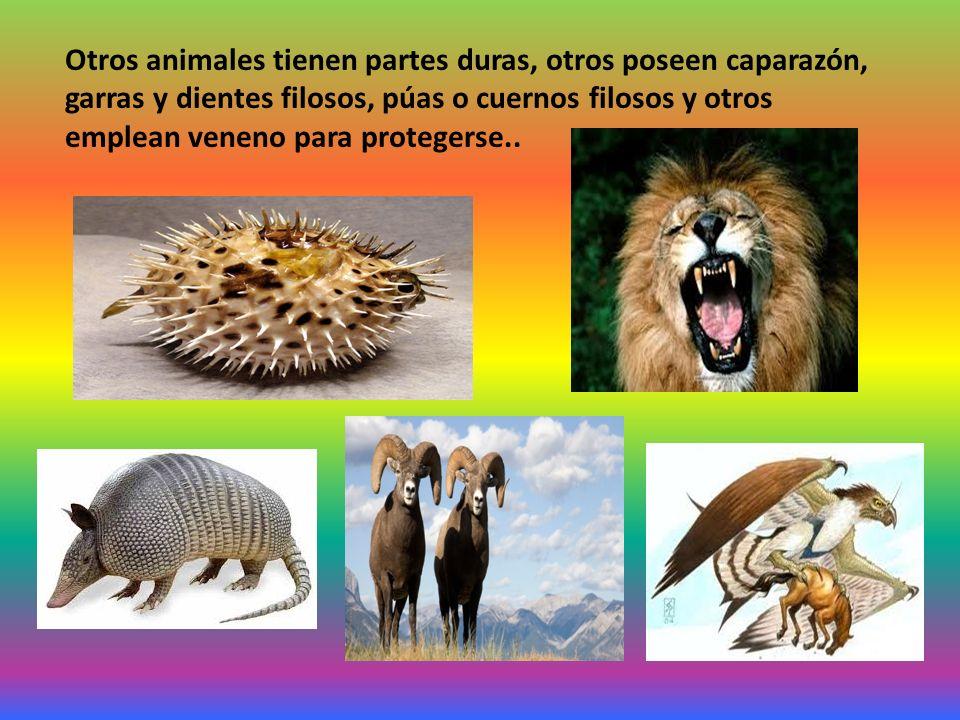 Otros animales tienen partes duras, otros poseen caparazón, garras y dientes filosos, púas o cuernos filosos y otros emplean veneno para protegerse..