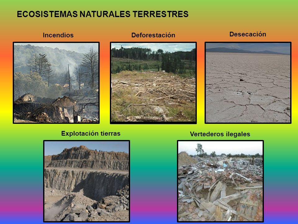 ECOSISTEMAS NATURALES TERRESTRES