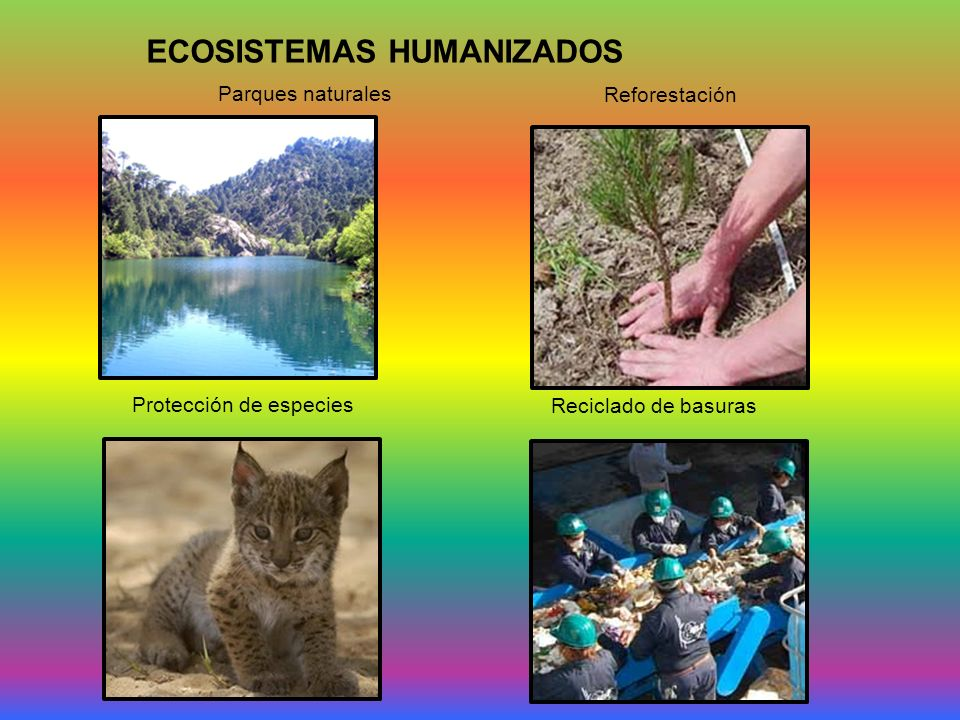 Protección de especies