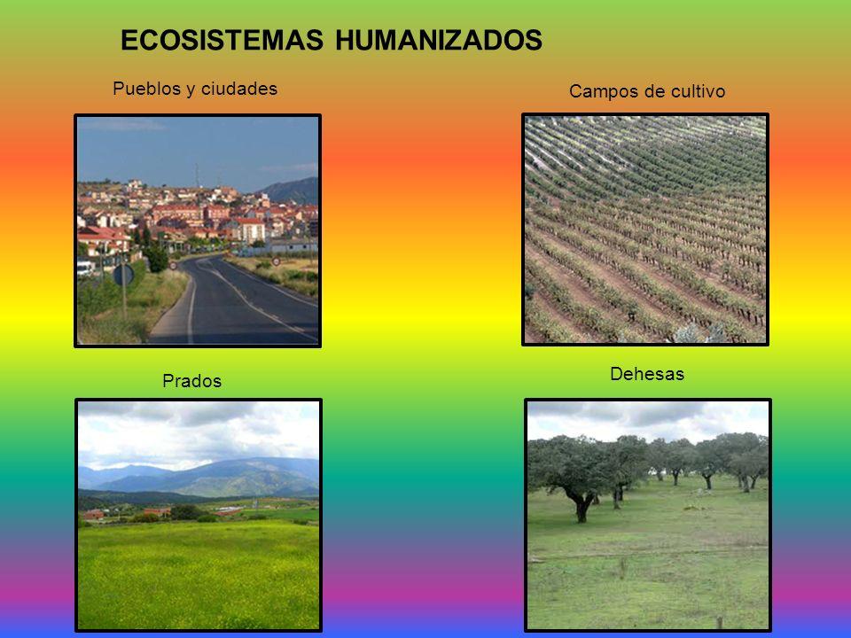 ECOSISTEMAS HUMANIZADOS