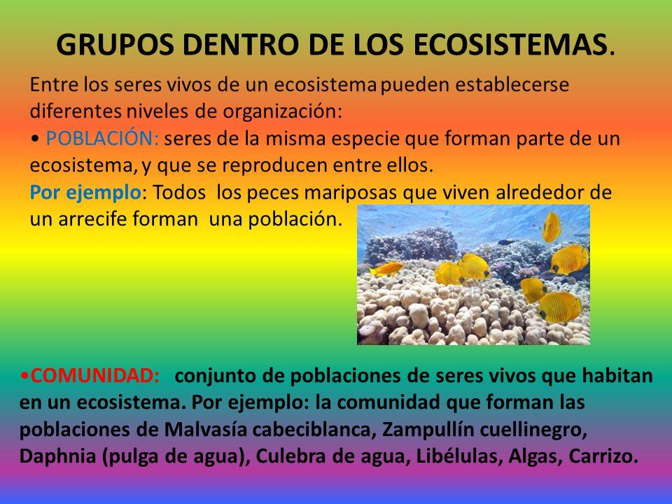 GRUPOS DENTRO DE LOS ECOSISTEMAS.