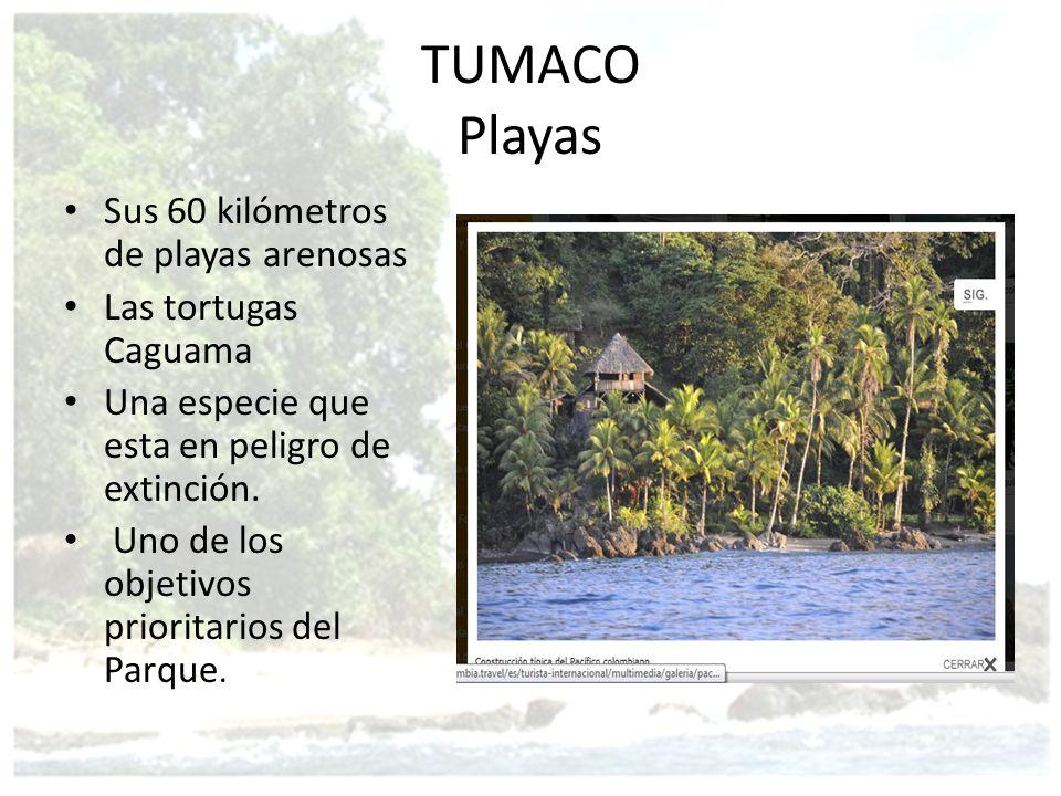 TUMACO Playas Sus 60 kilómetros de playas arenosas