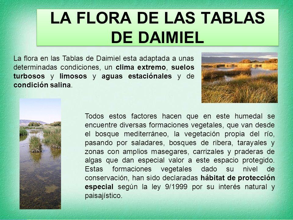 LA FLORA DE LAS TABLAS DE DAIMIEL