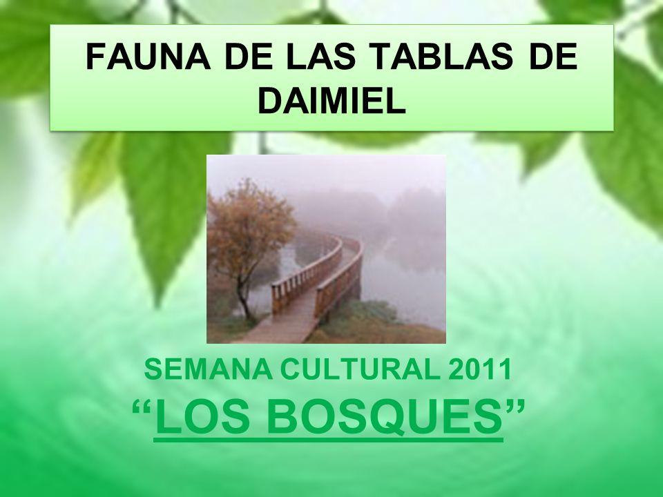 FAUNA DE LAS TABLAS DE DAIMIEL