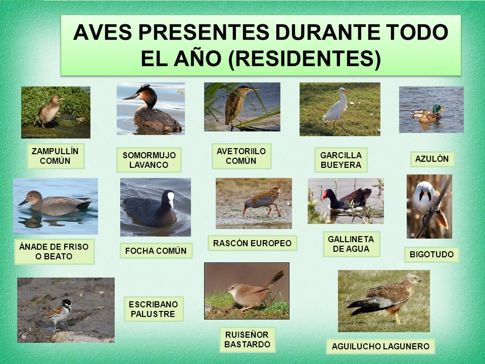 AVES PRESENTES DURANTE TODO EL AÑO (RESIDENTES)