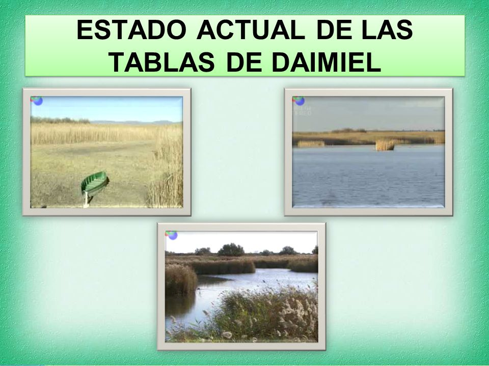 ESTADO ACTUAL DE LAS TABLAS DE DAIMIEL