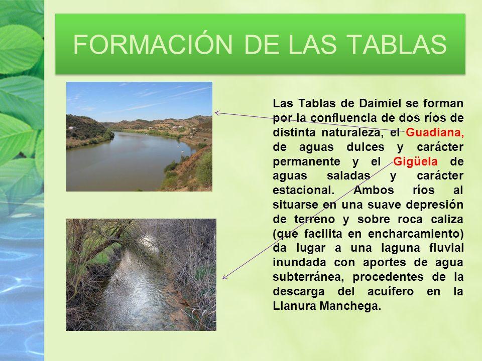 FORMACIÓN DE LAS TABLAS