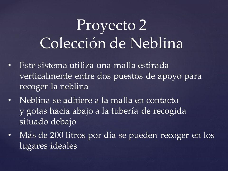 Proyecto 2 Colección de Neblina