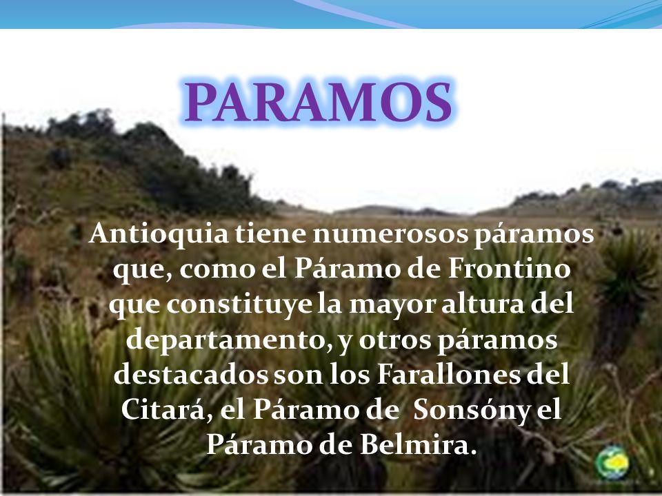 PARAMOS