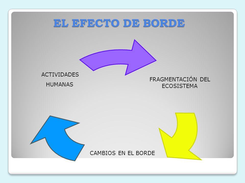 EL EFECTO DE BORDE ACTIVIDADES FRAGMENTACIÓN DEL HUMANAS ECOSISTEMA