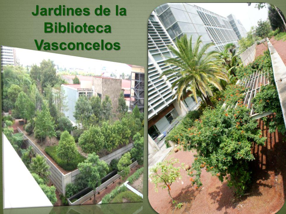 Jardines de la Biblioteca Vasconcelos