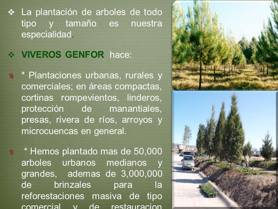 La plantación de arboles de todo tipo y tamaño es nuestra especialidad.