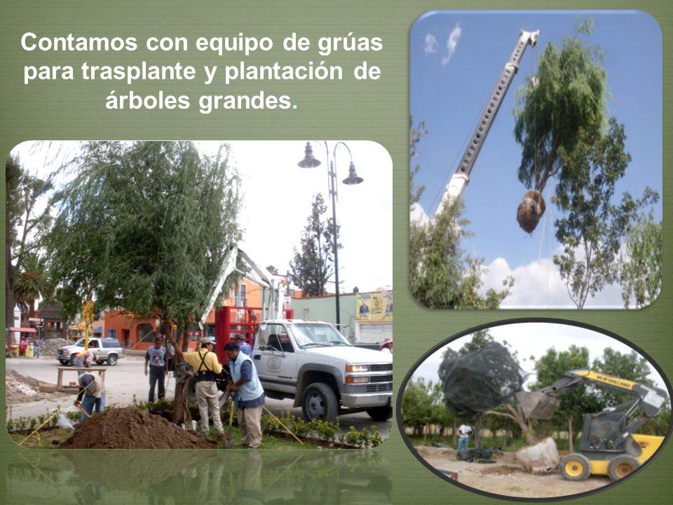 Contamos con equipo de grúas para trasplante y plantación de árboles grandes.