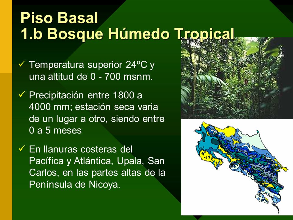 Piso Basal 1.b Bosque Húmedo Tropical