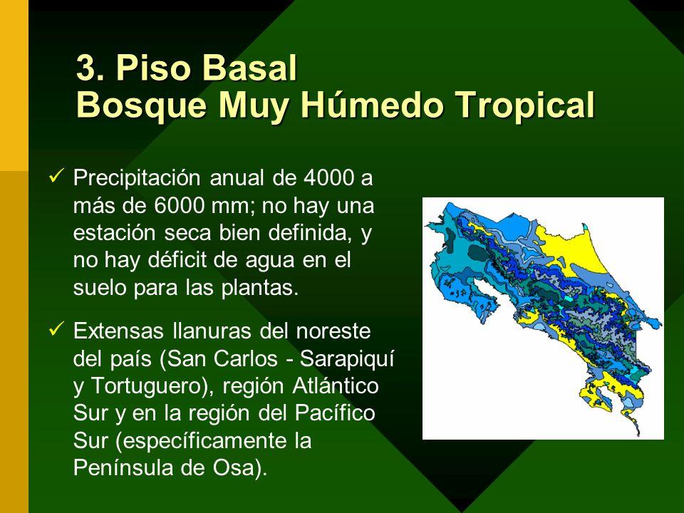 3. Piso Basal Bosque Muy Húmedo Tropical
