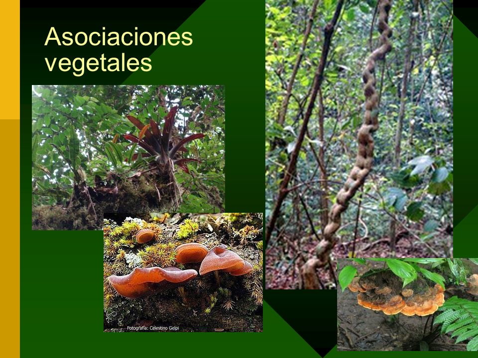 Asociaciones vegetales