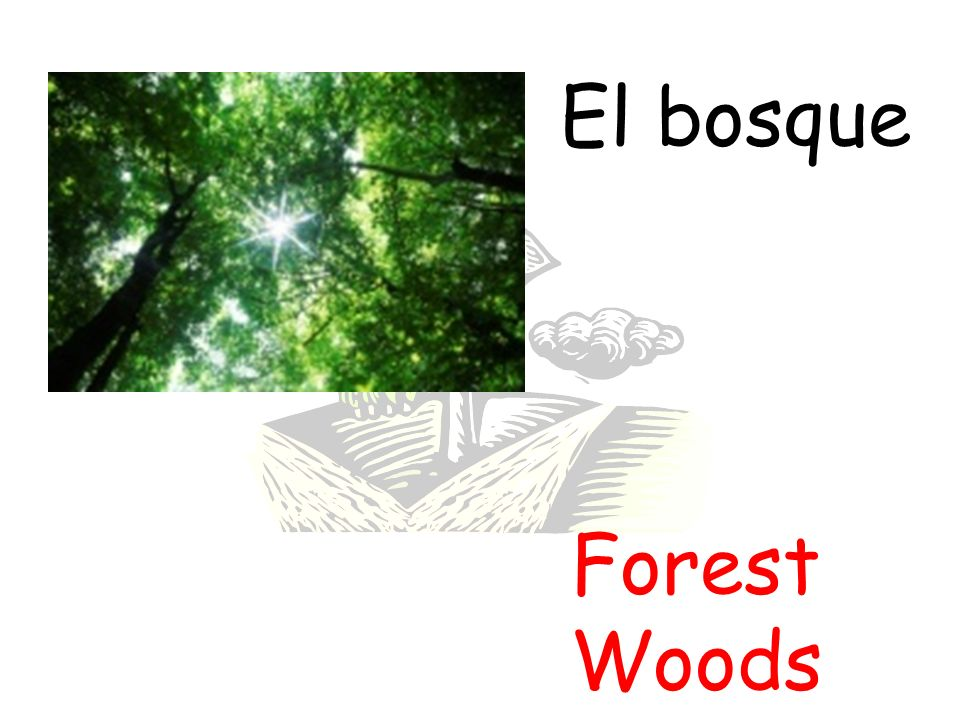 El bosque Forest Woods