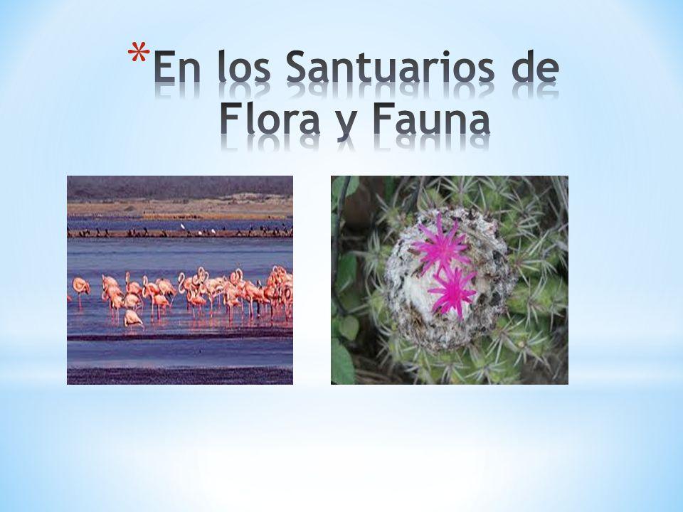 En los Santuarios de Flora y Fauna