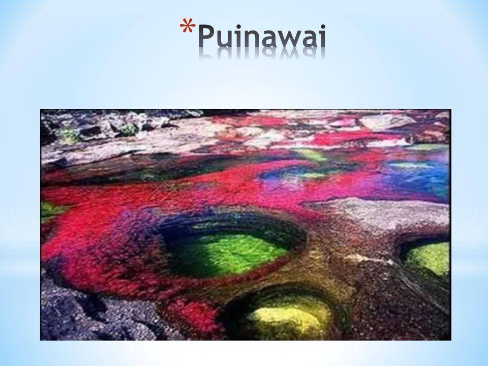 Puinawai
