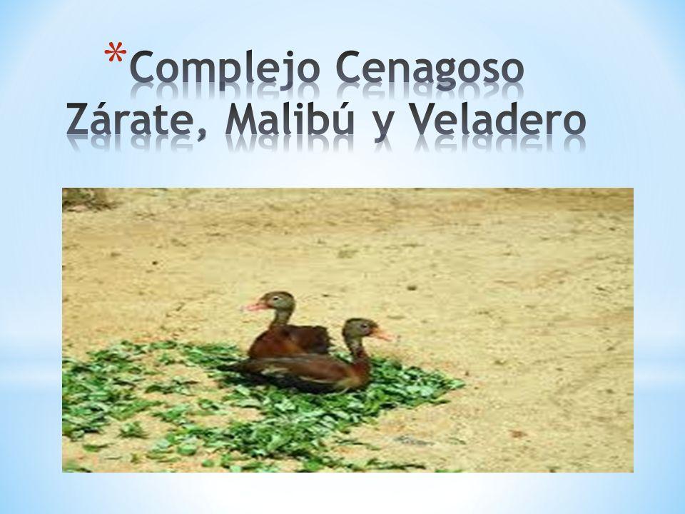 Complejo Cenagoso Zárate, Malibú y Veladero