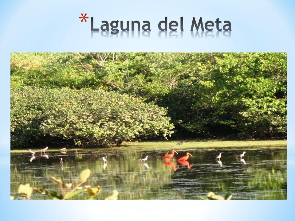 Laguna del Meta