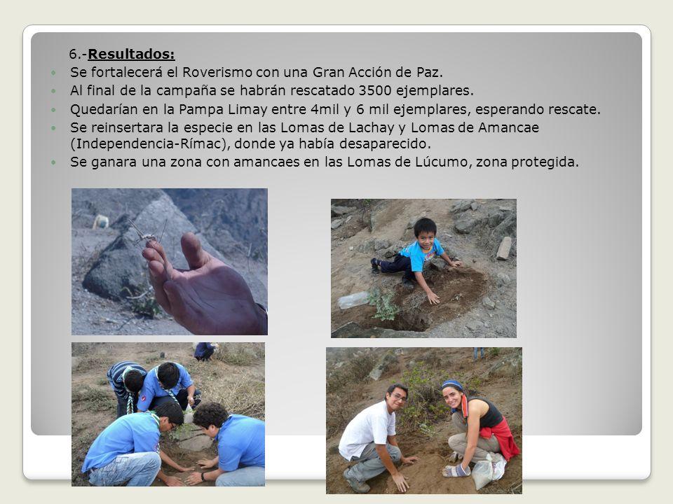 6.-Resultados: Se fortalecerá el Roverismo con una Gran Acción de Paz. Al final de la campaña se habrán rescatado 3500 ejemplares.