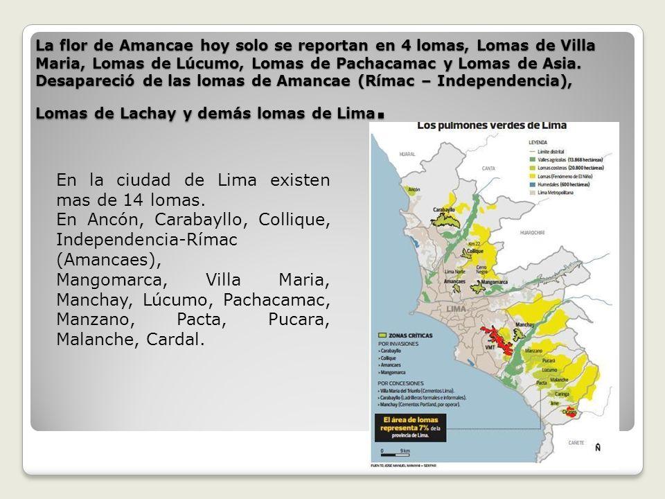 En la ciudad de Lima existen mas de 14 lomas.