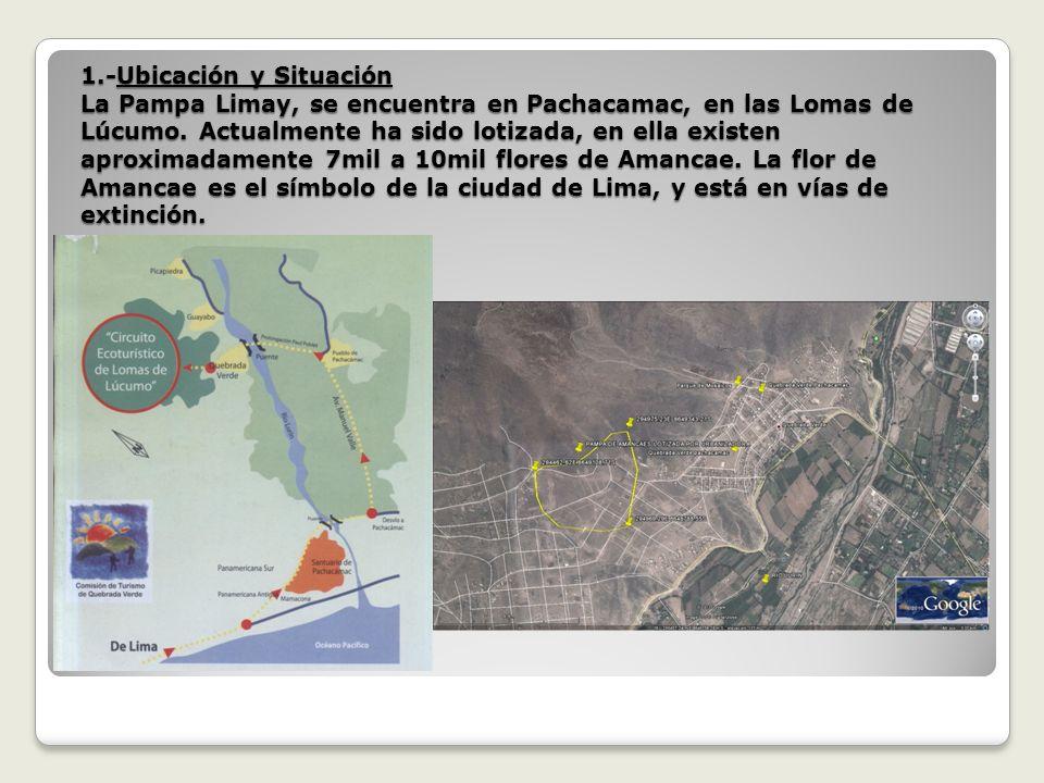 1.-Ubicación y Situación La Pampa Limay, se encuentra en Pachacamac, en las Lomas de Lúcumo.
