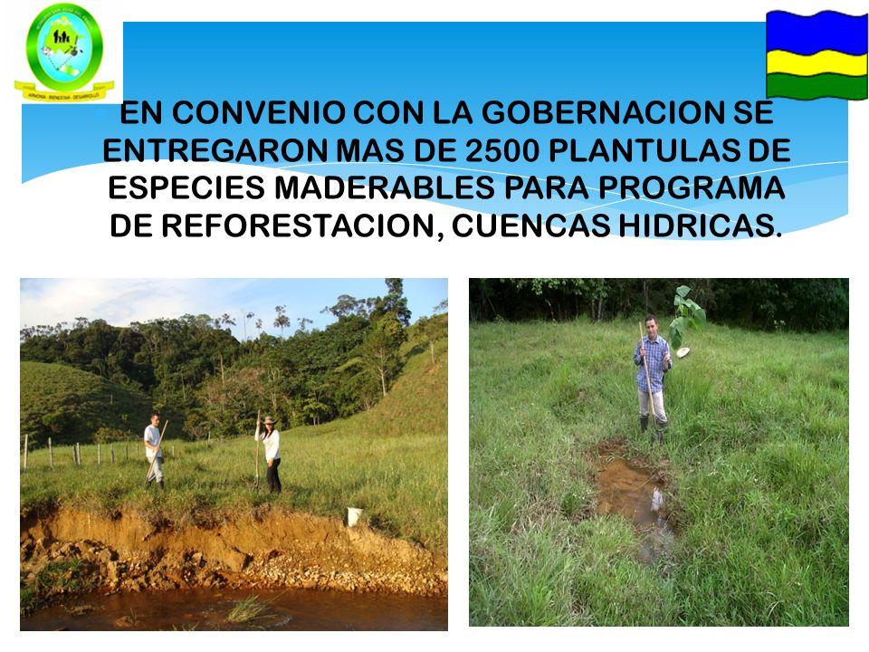 EN CONVENIO CON LA GOBERNACION SE ENTREGARON MAS DE 2500 PLANTULAS DE ESPECIES MADERABLES PARA PROGRAMA DE REFORESTACION, CUENCAS HIDRICAS.