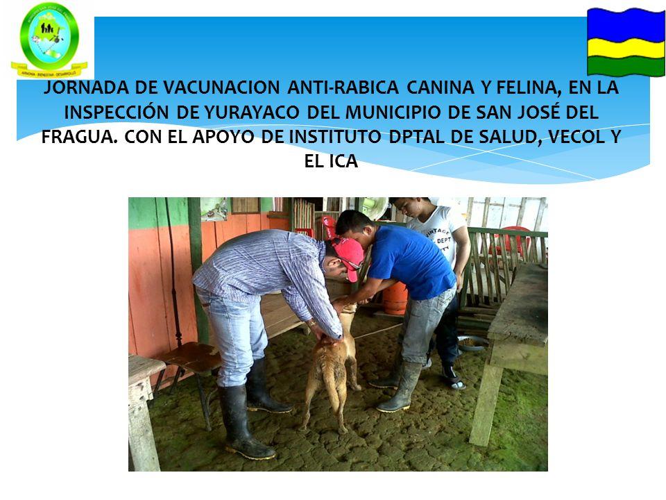 JORNADA DE VACUNACION ANTI-RABICA CANINA Y FELINA, EN LA INSPECCIÓN DE YURAYACO DEL MUNICIPIO DE SAN JOSÉ DEL FRAGUA.