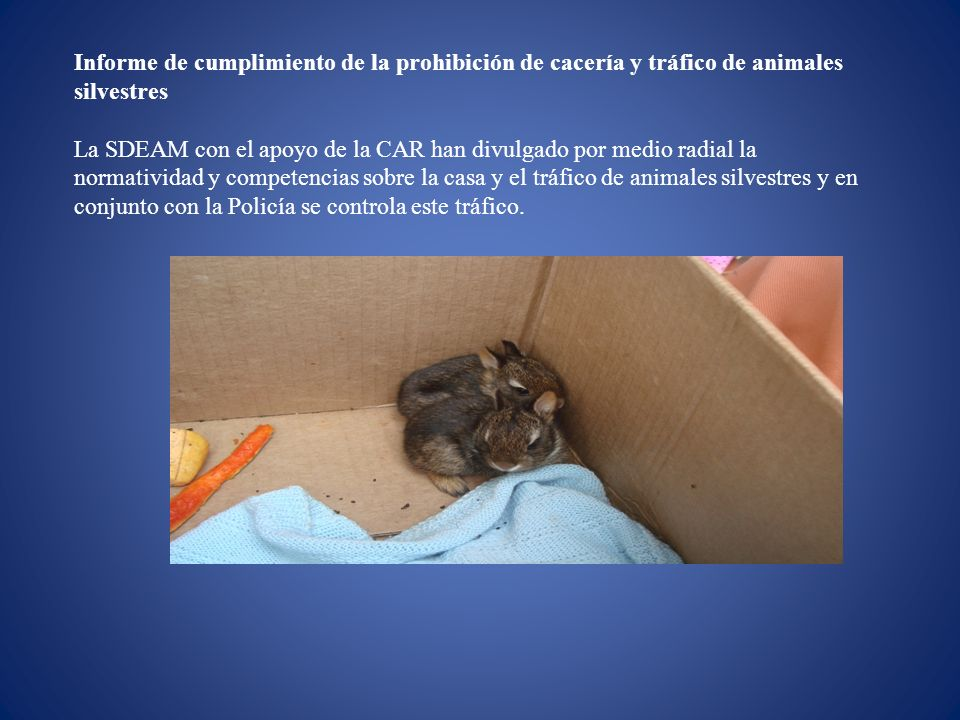 Informe de cumplimiento de la prohibición de cacería y tráfico de animales silvestres