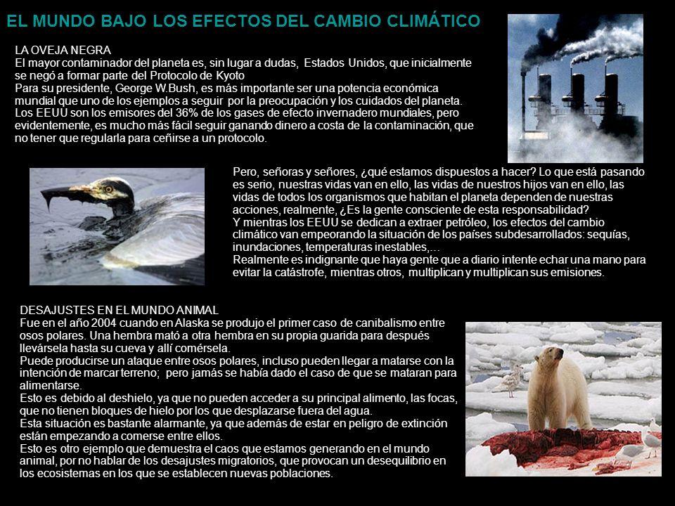 EL MUNDO BAJO LOS EFECTOS DEL CAMBIO CLIMÁTICO