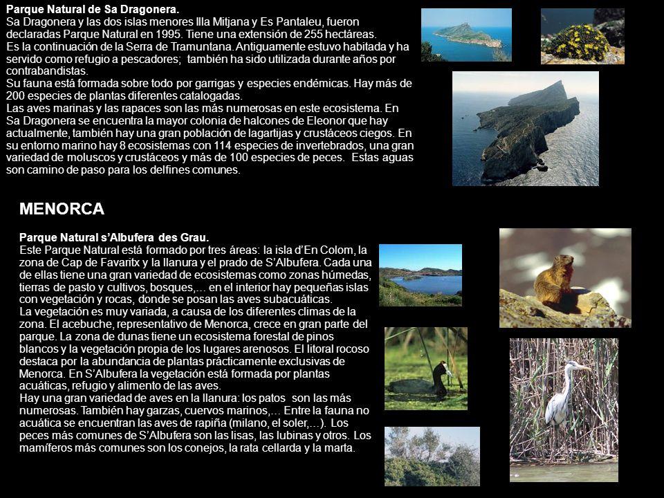 MENORCA Parque Natural de Sa Dragonera.