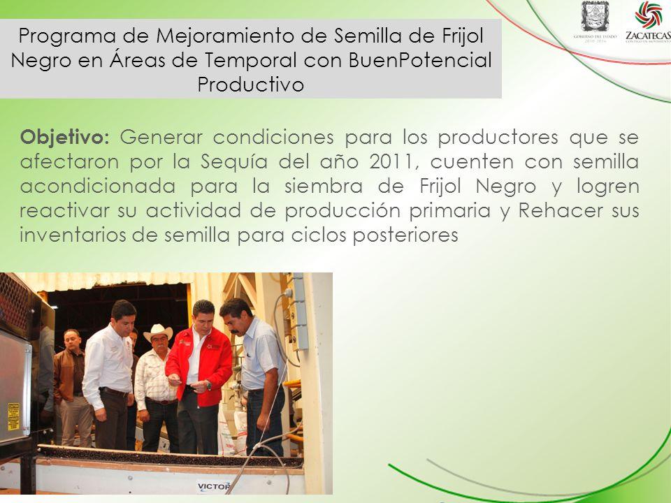 Programa de Mejoramiento de Semilla de Frijol Negro en Áreas de Temporal con BuenPotencial Productivo