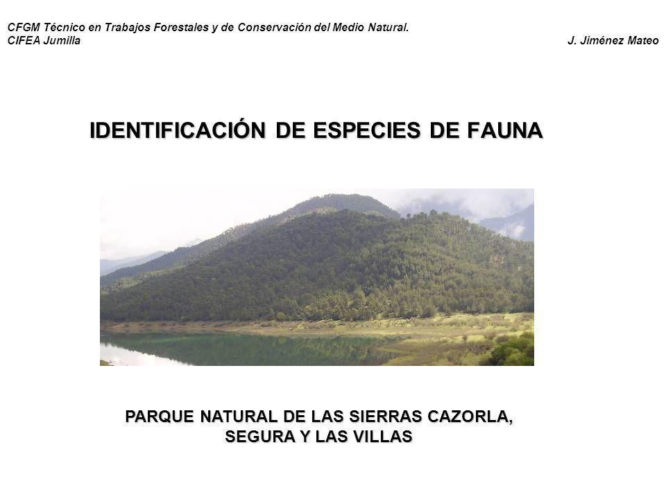 IDENTIFICACIÓN DE ESPECIES DE FAUNA